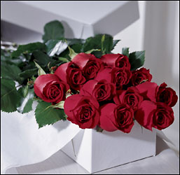 1 dz Red Roses Boxed in West Hartford CT, Lane & Lenge Florists, Inc