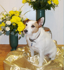 Our shop dog, Cooper in Charlotte NC, Baskets And Blossoms