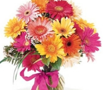 Vased Gerbera Daisies in Big Rapids, Cadillac, Reed City and Canadian Lakes MI, Patterson's Flowers, Inc.