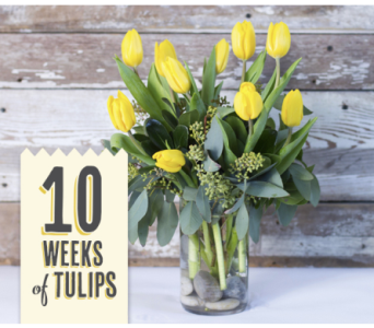 10 Weeks of Tulips in Oshkosh WI, House of Flowers