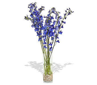 Simply Delphinium in St. Louis MO, Walter Knoll Florist