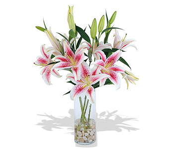 Simply Lilies in St. Louis MO, Walter Knoll Florist