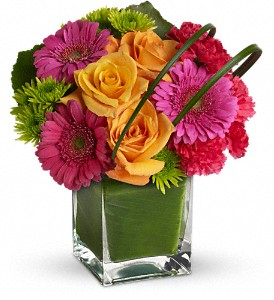 Teleflora's Party Girl in Buffalo Grove IL, Blooming Grove Flowers & Gifts