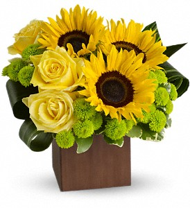 Teleflora's Sunflower Fantasy in Warren OH, Dick Adgate Florist, Inc.