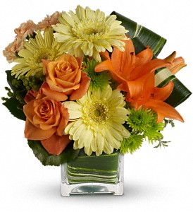 Teleflora's Citrus Crush in Grass Lake MI, Designs By Judy