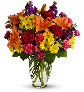Bright Eyes in Rochester NY, Expressions Flowers & Gifts