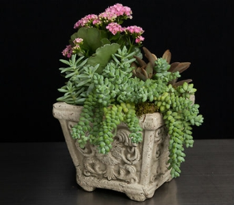 Succulent Gardens in La Jolla CA, Adelaide's Florists and Decorators