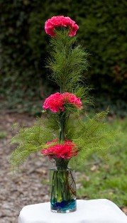Dianthus Topiary in Winchester VA, Flowers By Snellings