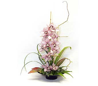 Orchid Elegance in Kailua HI, The Picket Fence Florist