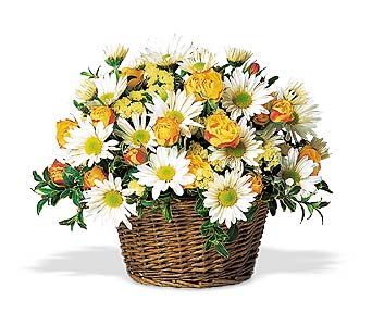 Sunshine In A Basket in Cohasset MA, ExoticFlowers.biz