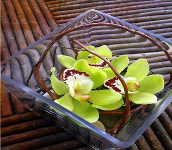 Cymbidium Zen (Deluxe) in Calgary AB, The Tree House Flower, Plant & Gift Shop