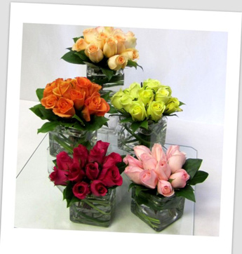 Posies of Roses in Newport News VA, Pollards Florist