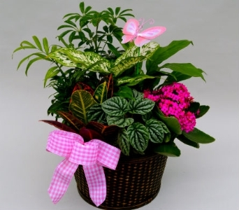 Desk Planter  in Utica NY, Chester's Flower Shop And Greenhouses