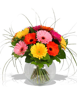 MIXED GERBERAS in Calgary AB, The Tree House Flower, Plant & Gift Shop