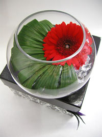 FUNKY GERBERA BOWL in Calgary AB, The Tree House Flower, Plant & Gift Shop