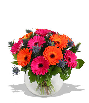 GERBERAS AND SEA HOLLY in Calgary AB, The Tree House Flower, Plant & Gift Shop