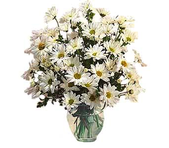 OT11-2a ''Delightful Daisies'' in Oklahoma City OK, Array of Flowers & Gifts