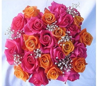 24 Pink and Orange Roses in Norristown PA, Plaza Flowers