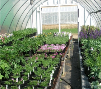 Greenhouse Plants in Gardner MA, Valley Florist, Greenhouse & Gift Shop
