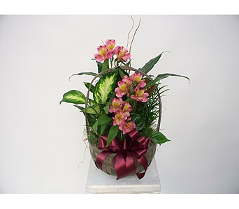 Soothing Pinks Planter in Indianapolis IN, Gillespie Florists
