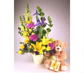 Beary Sweet Boy in Indianapolis IN, McNamara Florist