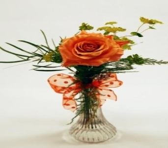 Single Stem Orange Rose Local and Nationwide Guaranteed Delivery - GoFlorist.com