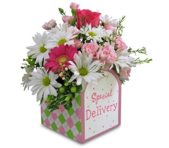 Special Delivery - Girl in Cleves OH, Nature Nook Florist & Wine Shop