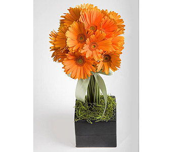 Gerbera Topiary in San Antonio TX, Blooming Creations Florist