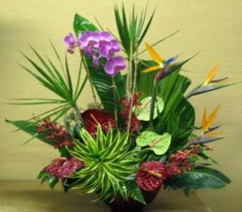 Tropical Paradise in Delray Beach FL, Delray Beach Florist