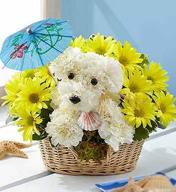 DoggiePoddle  in Port Charlotte FL, Punta Gorda Florist Inc.