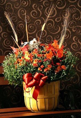 Steve's Fall Mums  in Indianapolis IN, Steve's Flowers and Gifts