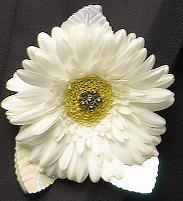 White Gerber Boutonniere in Perrysburg & Toledo OH  OH, Ken's Flower Shops