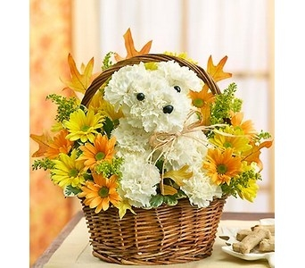 a-DOG-able� for Fall in Concord CA, Jory's Flowers