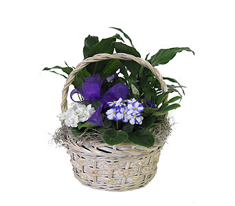 Peaceful Violet Basket in Grand Rapids MI, Kennedy's Flower Shop