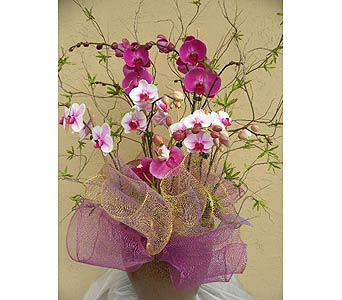 Orchid Planter in Sunnyvale CA, Flowers By Sophia