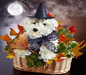 Witchy-Pooch in Fort Myers FL, Ft. Myers Express Floral & Gifts