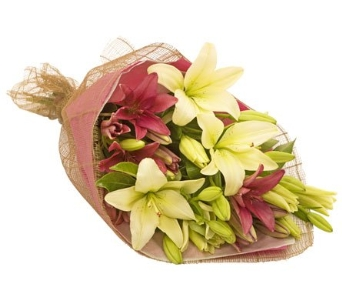 Lily Divine in flower-delivery NSW, Mona Vale Florist & Nursery