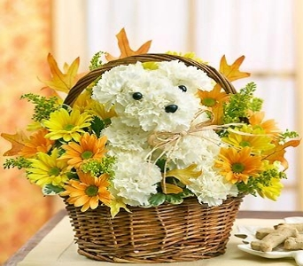 Pleasant Pooch Bouquet in Canton PA, Stulls Flowers