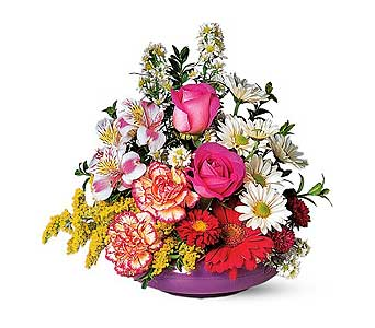 All Occasion in Santa Clara CA, Citti's Florists