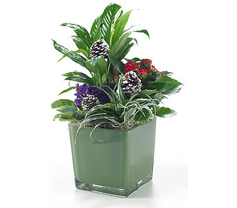 Green Glass Cube Planter in Georgetown ON, Vanderburgh Flowers, Ltd
