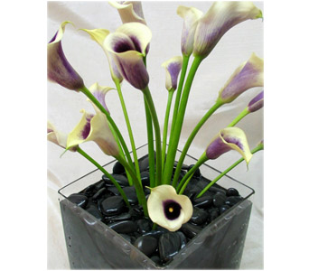 Ikebana Shooting Callas in New York NY, Starbright Floral Design