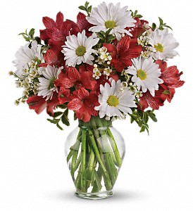 Dancing in Daisies in DeKalb IL, Glidden Campus Florist & Greenhouse