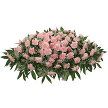 Timeless Traditions Pink Carnation Casket Spray in Denver CO, Lehrer's Flowers