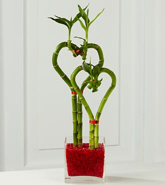 Valentines Bamboo - Deluxe in Guelph ON, Patti's Flower Boutique
