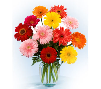 Gerber Daisy Vase in Norristown PA, Plaza Flowers