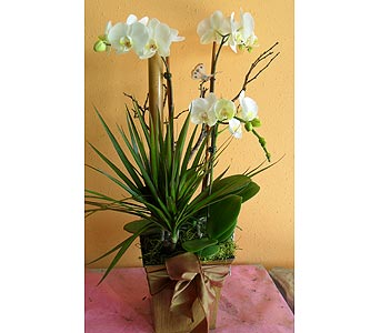 orchid arrangement  30H x19W in Rowland Heights CA, Charming Flowers