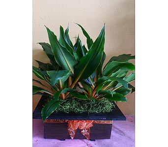 Orange green plants combo 20w x 18h in Rowland Heights CA, Charming Flowers