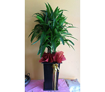 Lisa tree  55h x23w in Rowland Heights CA, Charming Flowers