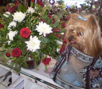 The Dog in the Purse. in Hanover PA, Country Manor Florist