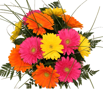 Gorgeous Gerbera Bouquet in Grimsby ON, Cole's Florist Inc.